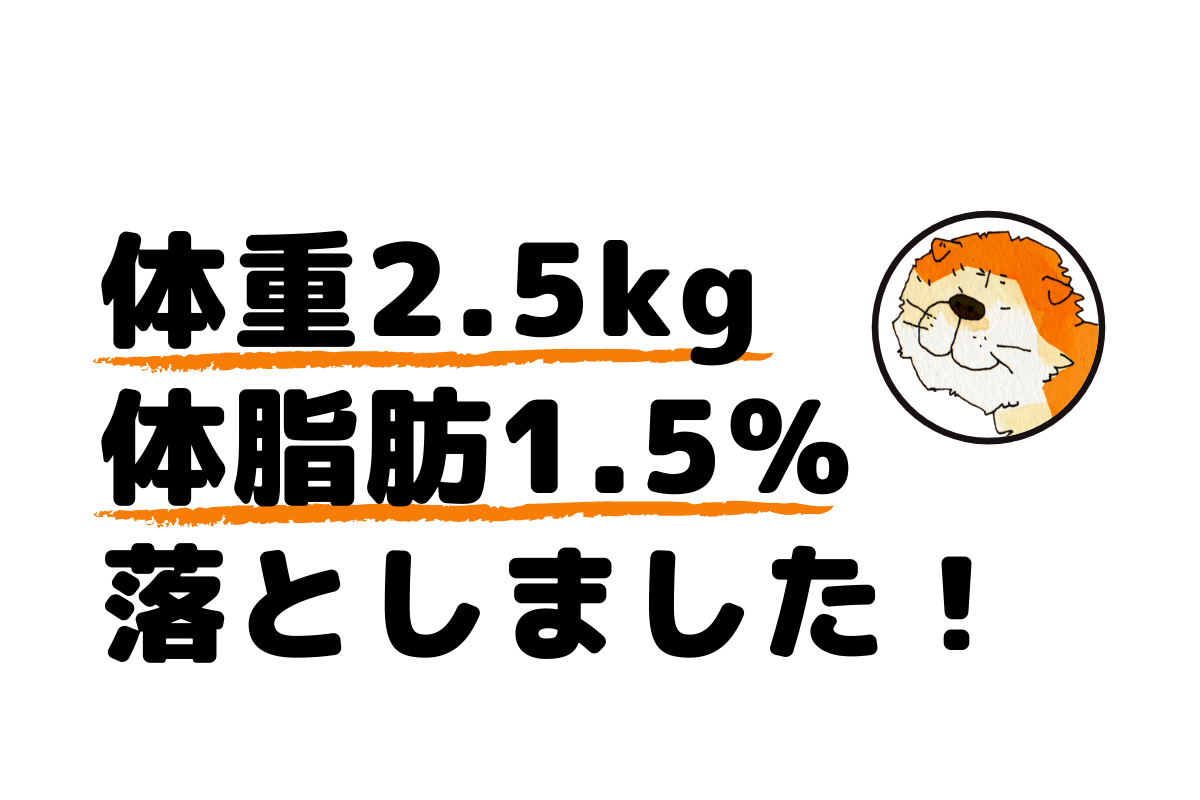 ダイエット2週間でマイナス2.5kg